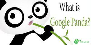 Google Panda là gì